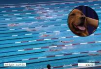 natacion perro